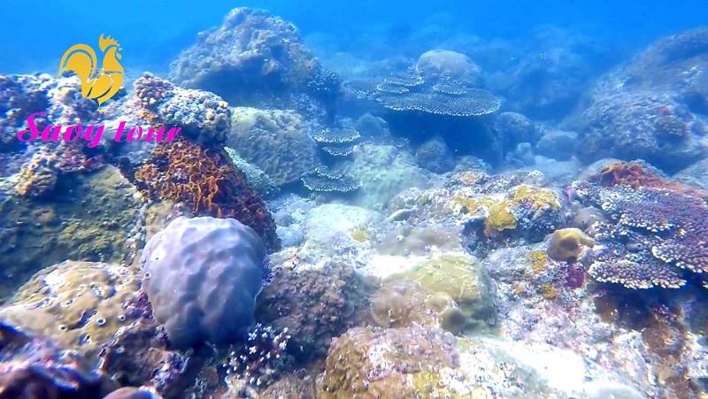 Lặn Ngắm San Hô Đảo Cồn Cỏ